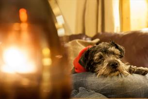 Canine Cottages - more than 80 dog-friendly cottages in the Cotswolds