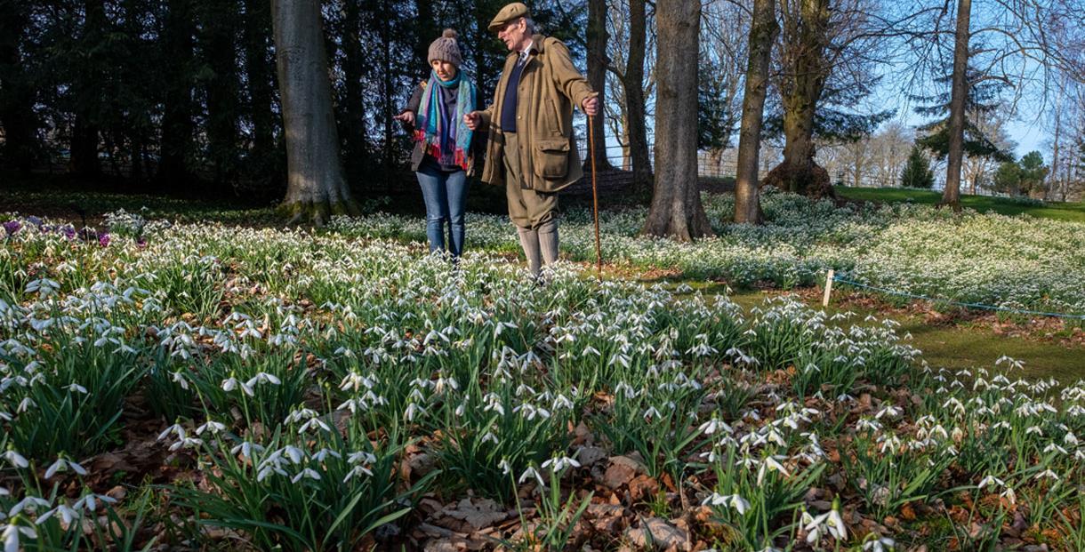The Historic Snowdrop Garden at Colesbourne