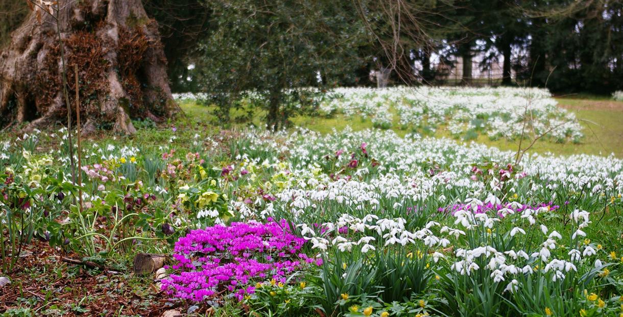 Snowdrop Weekends - Colesbourne Park