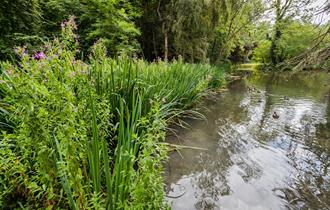 Wychwood Wild Garden in Shipton