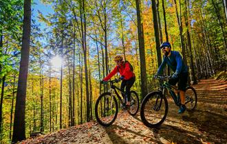 Cycling through the forest