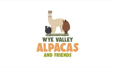 Wye Valley Alpacas and Friends
