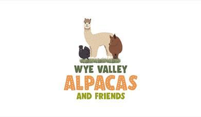 Wye Valley Alpacas and Friends