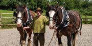 Coldcroft Shires & Traditional Skills