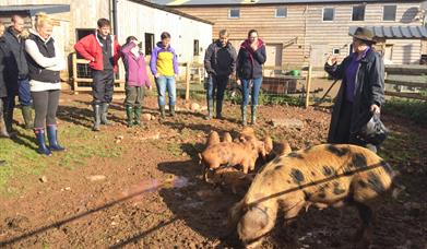 SMALLHOLDING FOR BEGINNERS at Humble by Nature