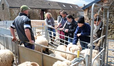 SHEEP FOR BEGINNERS at Humble by Nature