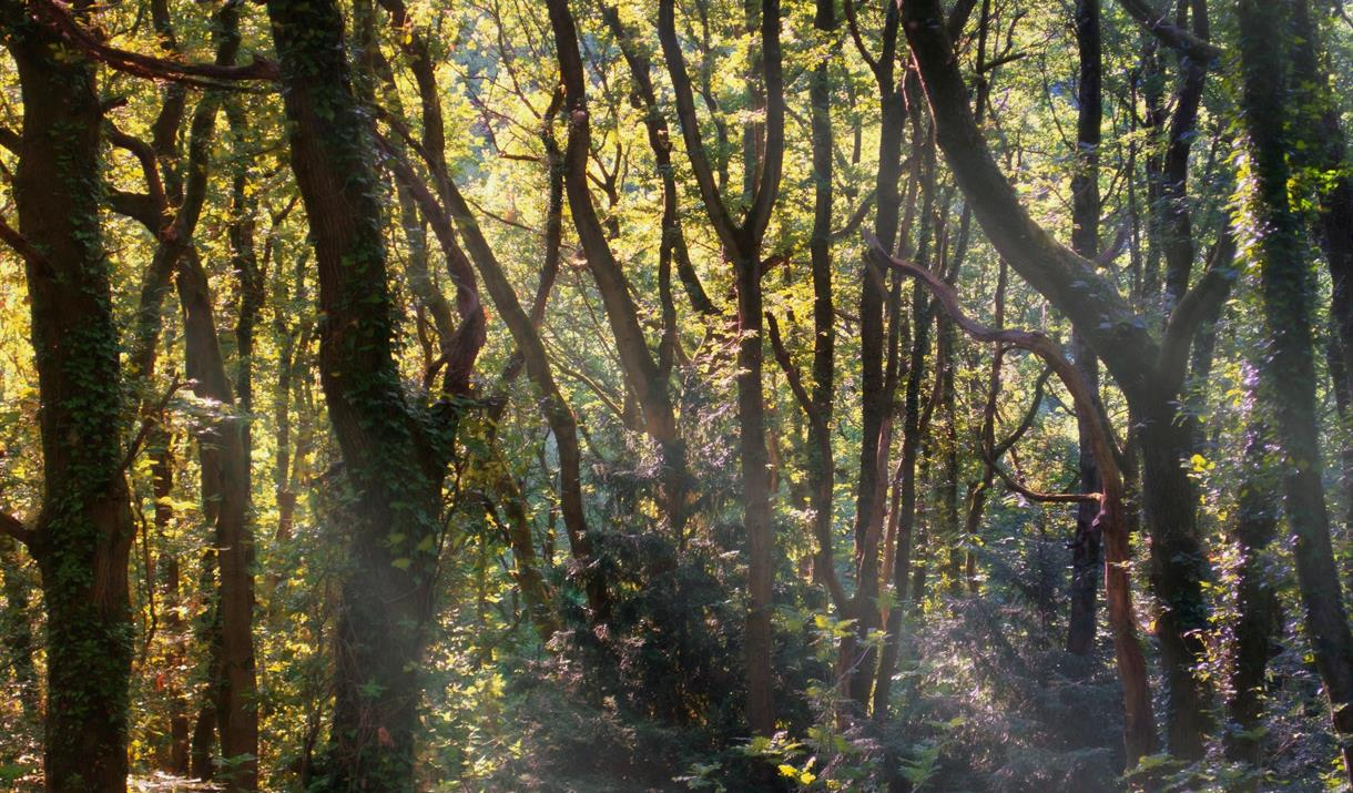 Highnam Woods Nature Reserve