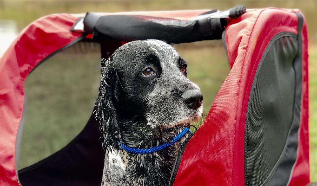 Cycle with your Pooch at Wye-Bikes
