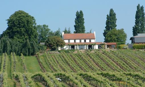 Three Choirs vineyard near Newent