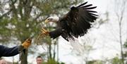 International Centre for Birds of Prey