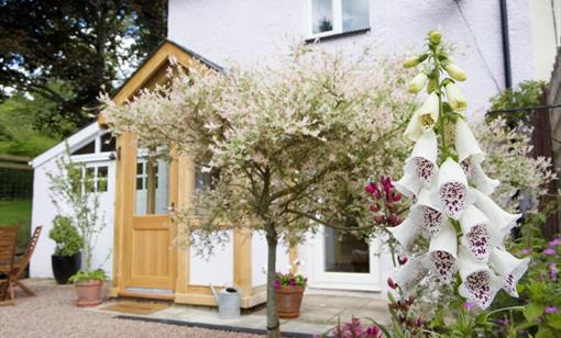 Rosebank Holiday Cottage