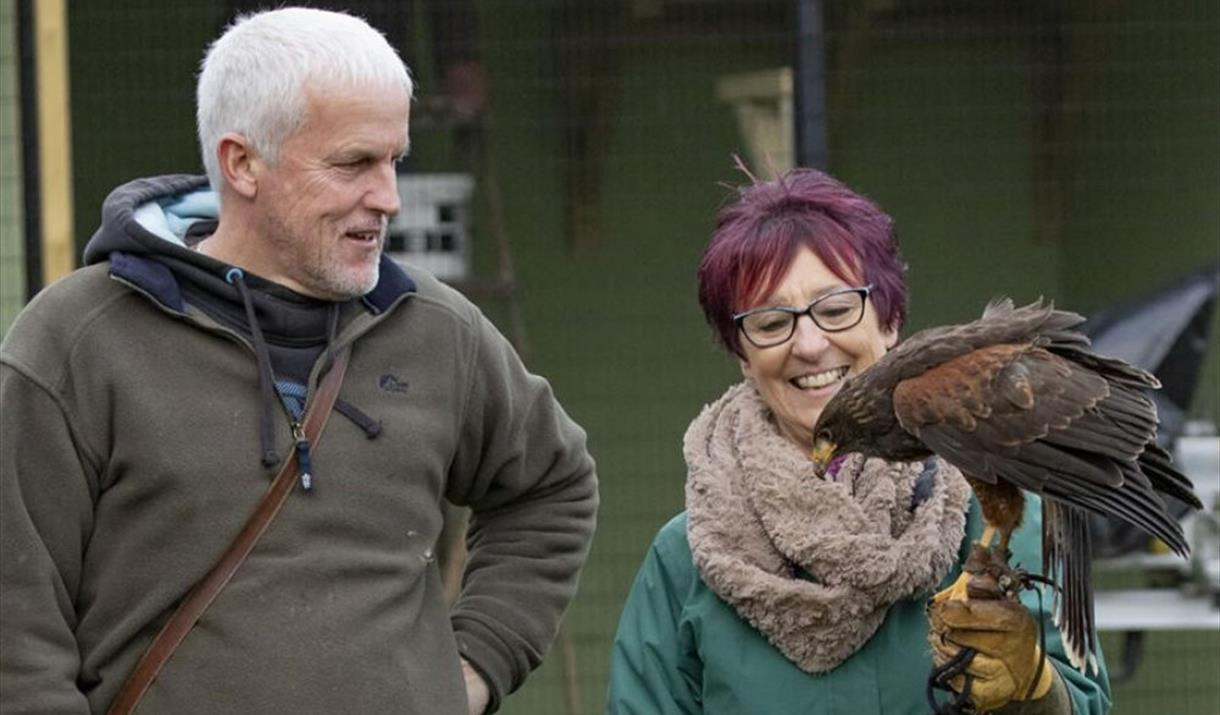 Handling and Flying Birds of Prey Experience - Half Day