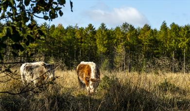 Woorgreens Nature Reserve