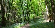Chepstow Park Wood
