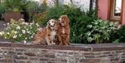 Thatch Close Cottages - We welcome dogs