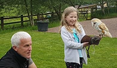Forest Barn Falconry