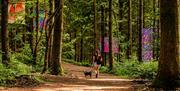 Temp Trail