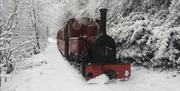 Twilight Trains at Perrygrove Railway