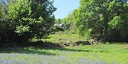 The wild flower meadow below Robins Barn