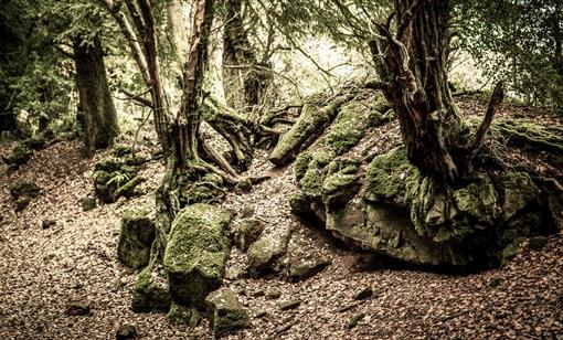 David Broadbent Photography, Forest of Dean, Wye Valley, professional photographer, editorial, photography, stills, video, timelapse, commercial, Fore