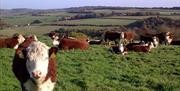 Dryslade Farm