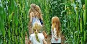 Kids enjoy the Giant Maize Maze
