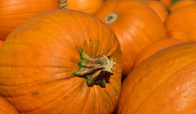 The Big Pumpkin Count at Clearwell Caves