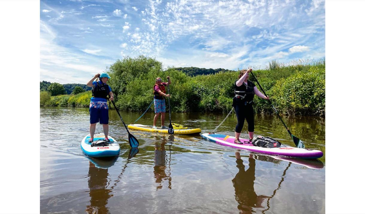 SUP Wildlife Safari at Paddleboarding Adventures