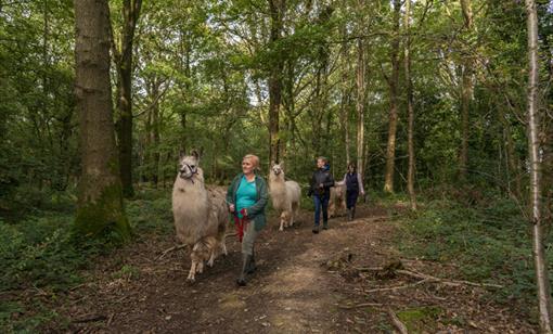 Briery Hill Llamas