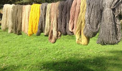 LEARN TO PLANT DYE YARN at Humble by Nature