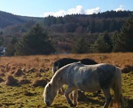 Thumbnail for Dartmoor