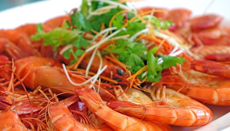 Seafood Festivals
