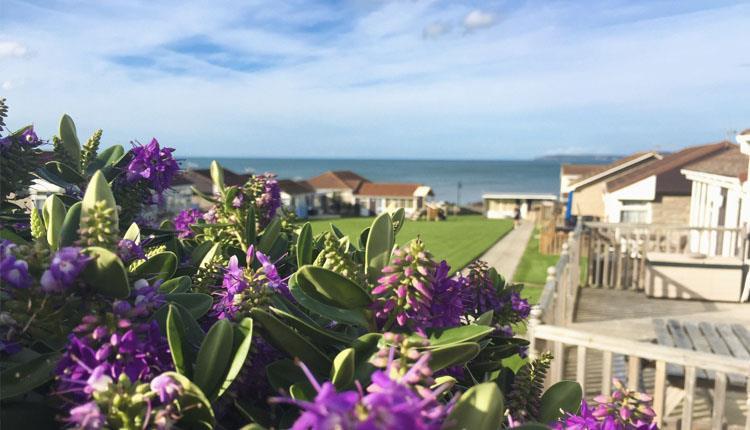 golden bay holiday village purple flowers