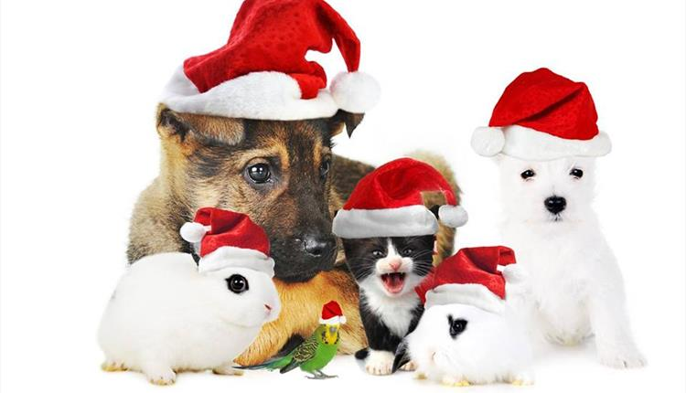 RSPCA - Christmas Fair at the Shelter