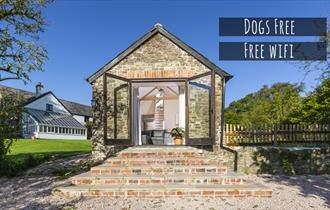 dogs free
