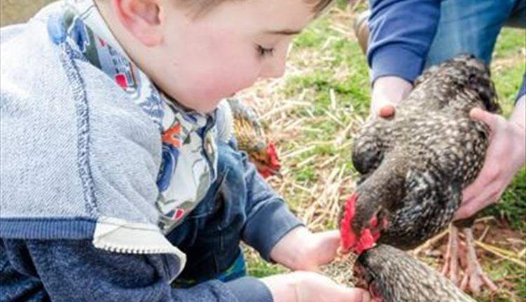Tots Go Wild, Occombe Farm, Paignton, Devon