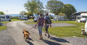 Dog walking at Dartmouth