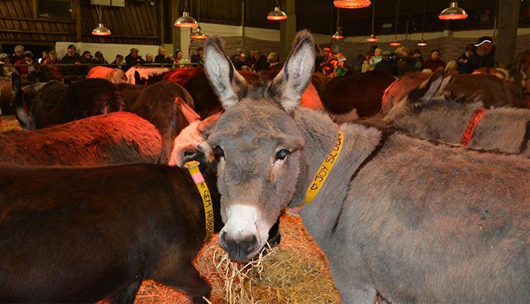 Carols by Candlelight at The Donkey Sanctuary