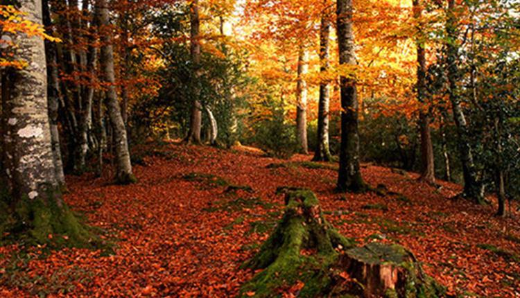 Autumn Colours Estate Tour with Lunch at Gidleigh Park