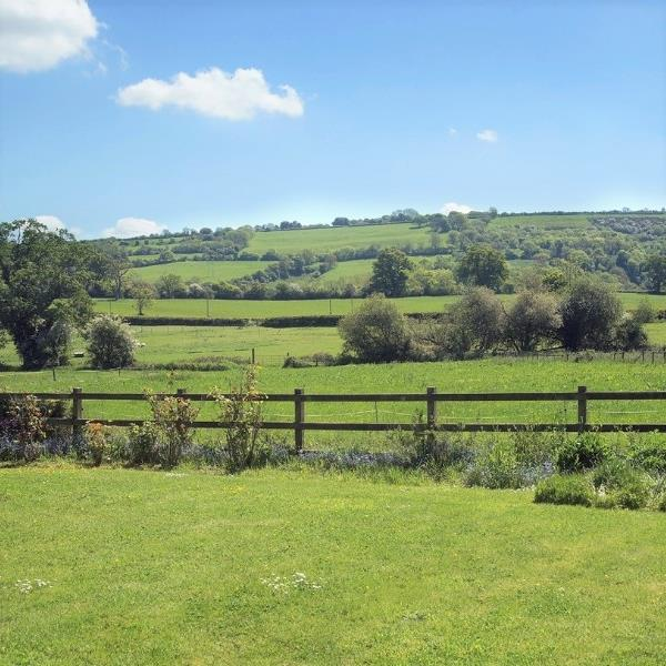 Lush green fields in Dorset