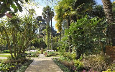 Abbotsbury Subtropical Gardens, Dorset