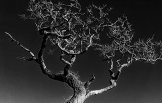 Andrew Haydon Photography
