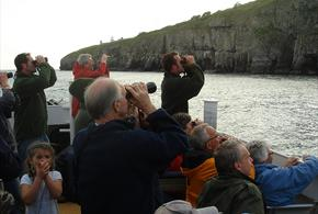 Events at Durlston Country Park: Seabird Boat Trip