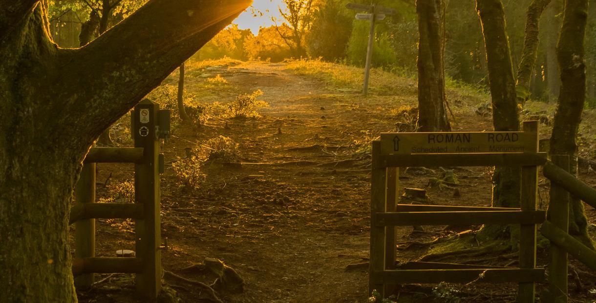 Dawn at Thorncombe Wood, copyright Ian Metcalfe