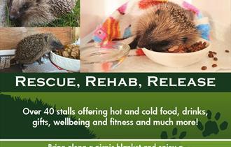Hamworthy Hedgehog Rescue Outdoor Vegan Fair