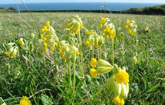 Events at Durlston Country Park:Life in the Meadows Guided Walk