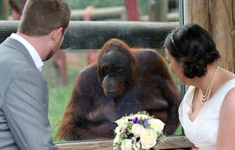 Monkey World Wedding Venue