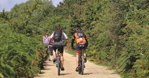 Cyclists near Studland, Dorset