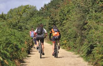 Cyclists near Studland, Dorset