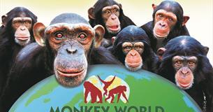 Monkey World, Dorset - Make the connection